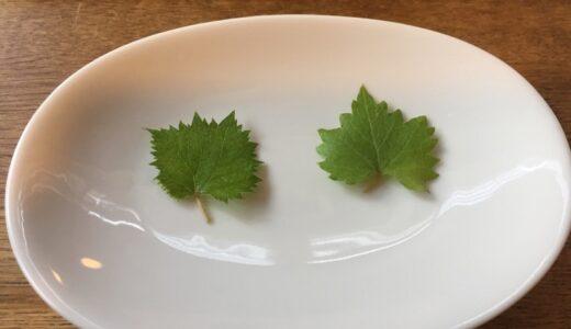 ぶどうを種から育てる育成記録〜その22